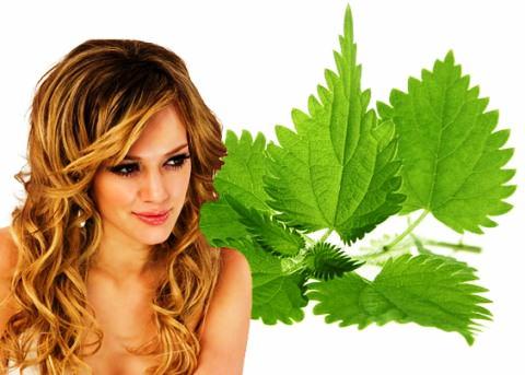 Трави для росту волосся. Рецепти 5d60ee56fdfaf