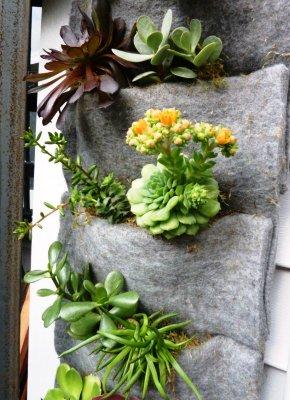 Вертикальні сади Бланка. Фото 1