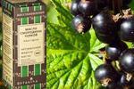 Олія насіння чорної смородини для обличчя